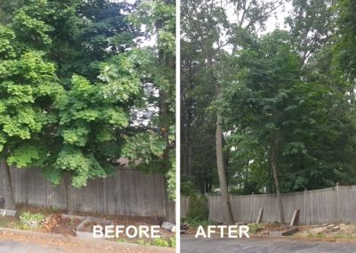 Tree Trimming and Removal In Nashua New Hampshire